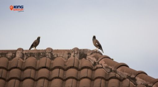 Bird Protection For Residential Use