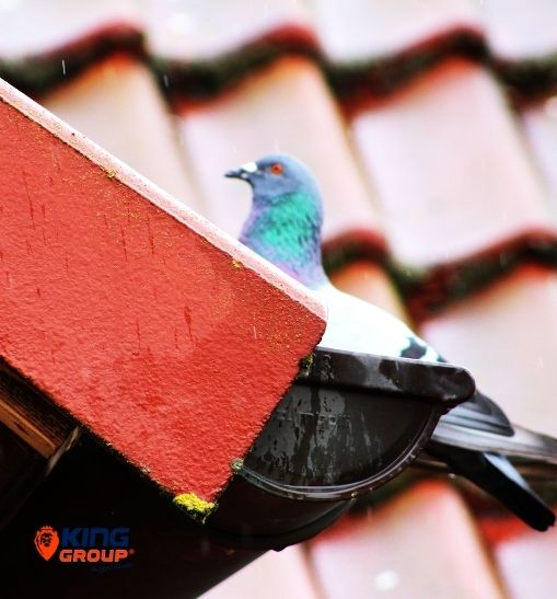 Stop Birds To Enter The Roofs & Gutters